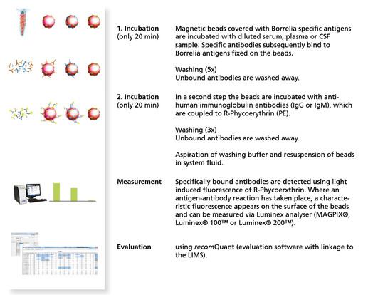 Mikrogen - recomBead Borrelia IgG 2 0 / IgM